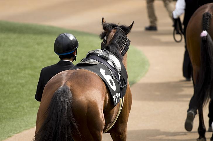 【展望】フェブラリーステークス全馬評価1【2017】