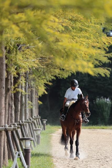 【牝馬】来年クラシック注目の2歳馬【2017】